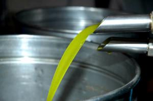estrazione-olio-oliva