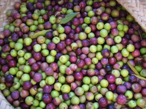 olio-d'oliva-olive