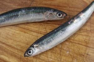 piscialandrea-sardine